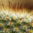 Cactus by Stephen Ruane
