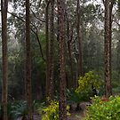 Spotted Gums, Surfside, Australia, 2014 by Graham Schofield