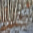 Poplar Cluster in the Wind by Wayne King