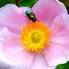 Green Fly, Pink Flower by Barnbk02