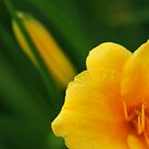 Lily Abstract by Richard G Witham