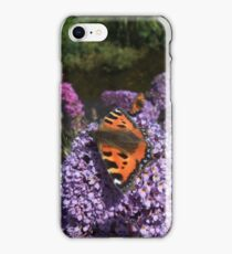 Buddleia (Buddleja davidii) iPhone Case/Skin