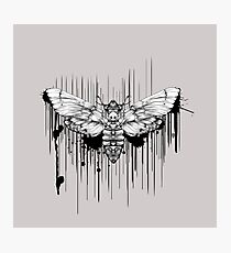 Ink Moth Photographic Print
