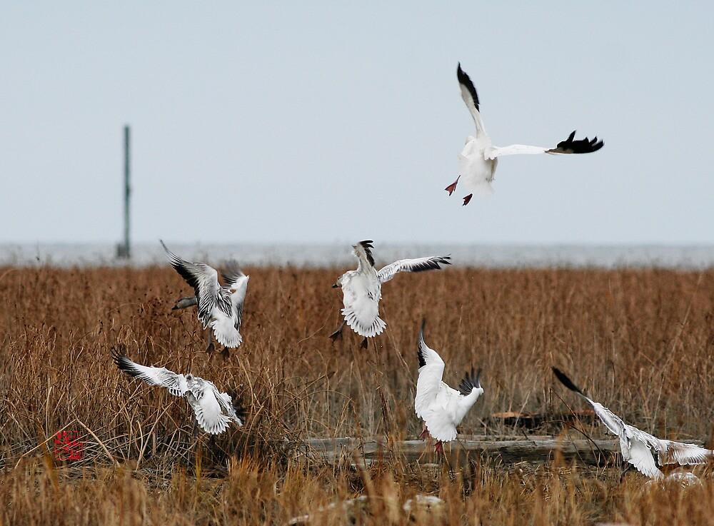 Landing by iceeyes