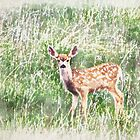 Fawn in the Grass by AspenWillow
