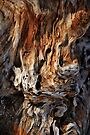 Driftwood of the Damned by Bob Wall