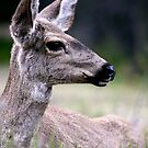 Wild At Heart by Varinia   - Globalphotos