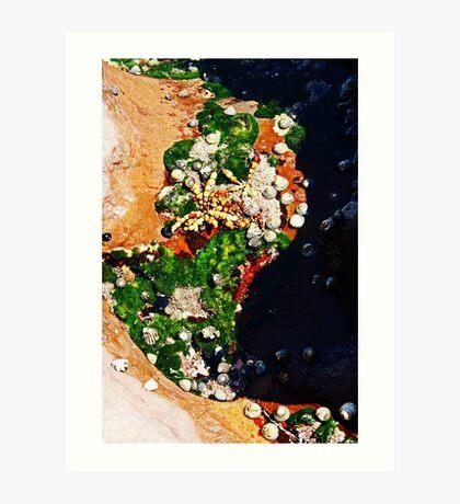 Muscheln und Moos Kunstdruck
