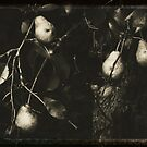 Pears in Black and White by MotherNature2