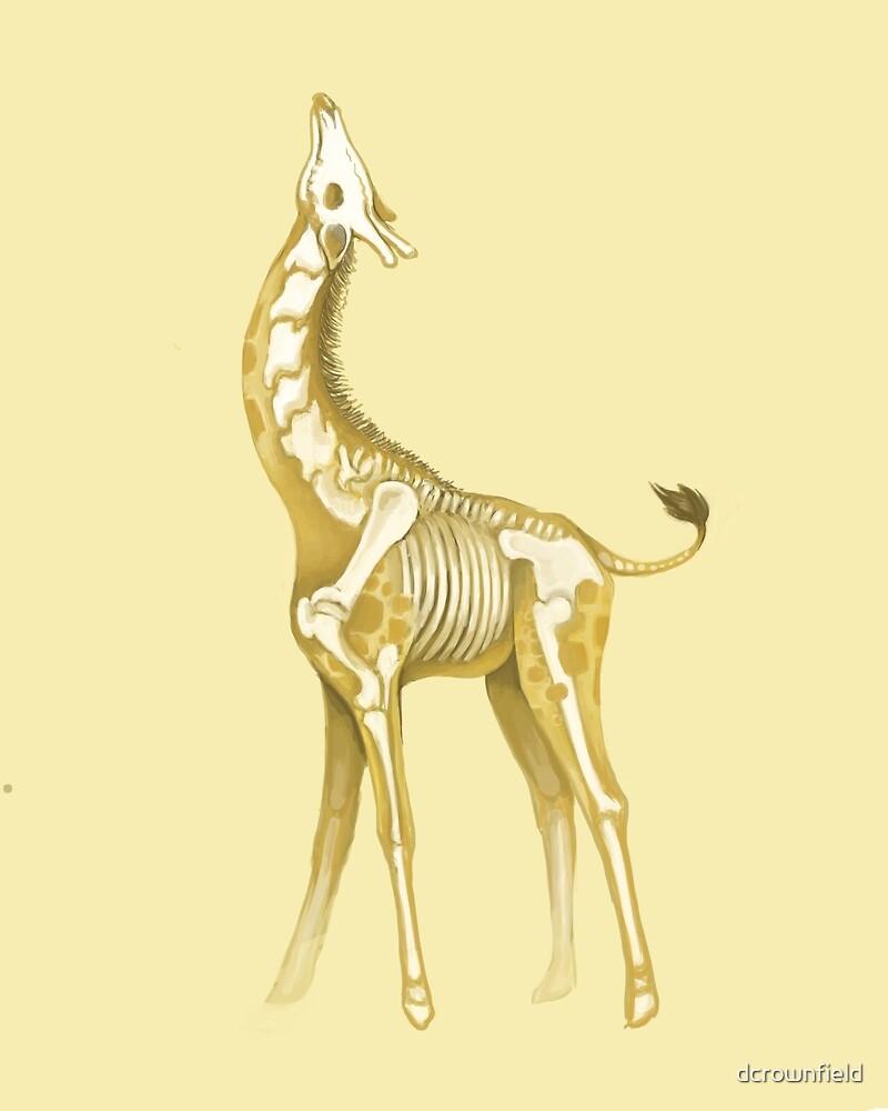 Giraffe by dcrownfield