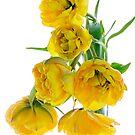 Yellow Tulips - Original by Ann Garrett