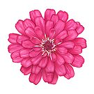 Zinnia in Pink by Suzannah Alexander