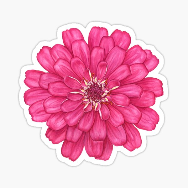 Zinnia in Pink Sticker