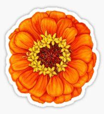 Zinnia in Orange Sticker