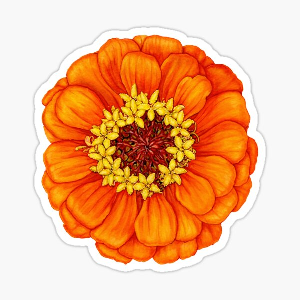 Zinnia in Orange Sticker
