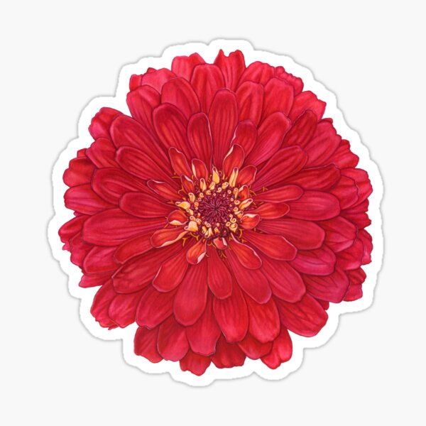 Zinnia in Red Sticker