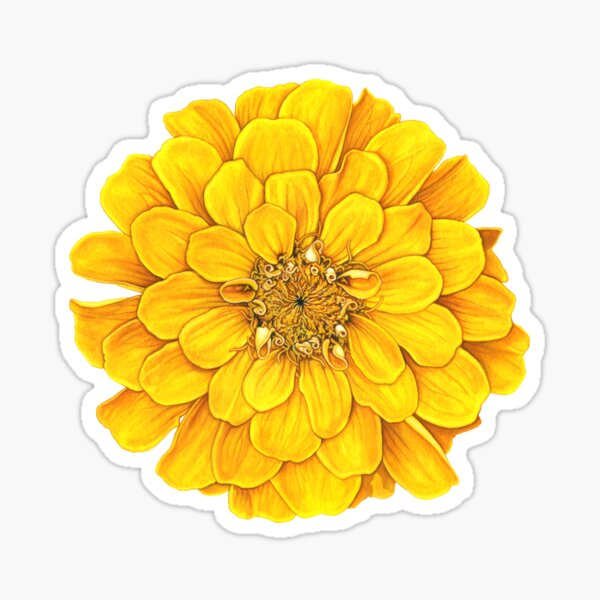 Zinnia in Yellow Sticker
