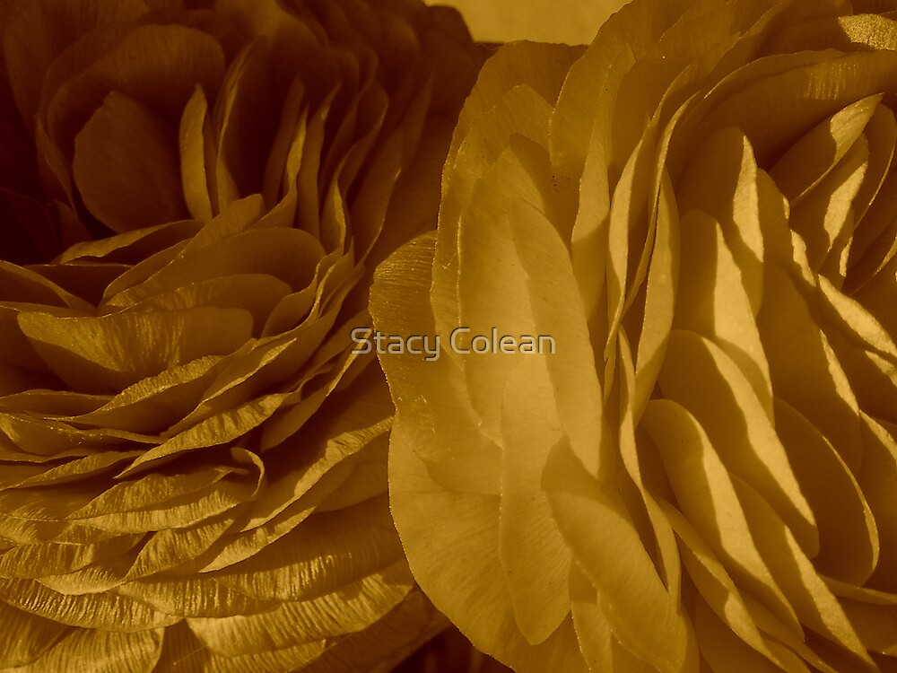 Beautiful Pair by Stacy Colean