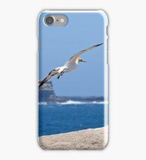 Australasian Gannets - Portland VIC (4062) iPhone Case/Skin