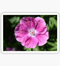 Pink summer flower blossom (Macro Close-Up) Sticker