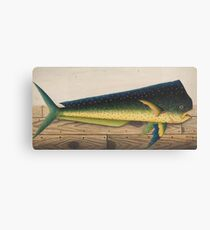 Mahi-Mahi Fish artwork Canvas Print