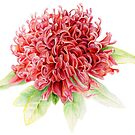Waratah Telopea speciosissima red flower watercolor by Sarah Trett
