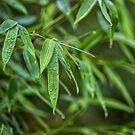 Fresh Green Zen Bamboo Leaf by artsandsoul