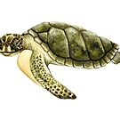 Kemp's Ridley Sea Turtle by Suzannah Alexander