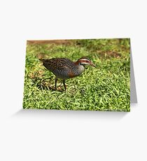 Buff-banded Rail - Lara VIC (720) Greeting Card
