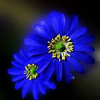 Royal Blue Asters - Orton Effect by BlueMoonRose