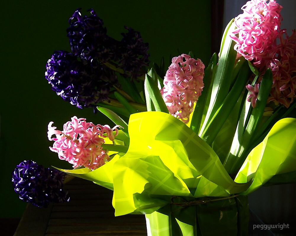 Vibrant Hyacinth by peggywright