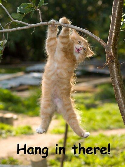 Accrocher dans laffiche de chat là affiche drôle parfaite de motivation pour
