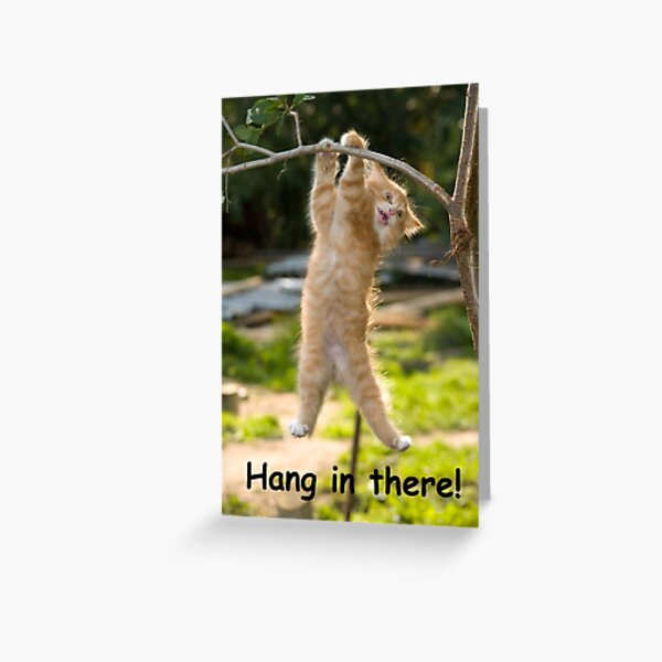 Hang in There Cat Poster - Perfect Funny Motivational Poster For Home or Office - Humorous Decor, Funny Quote Greeting Card
