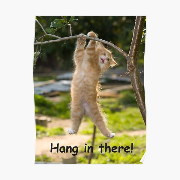 Hang in There Cat Poster - Perfect Funny Motivational Poster For Home or Office - Humorous Decor, Funny Quote Poster