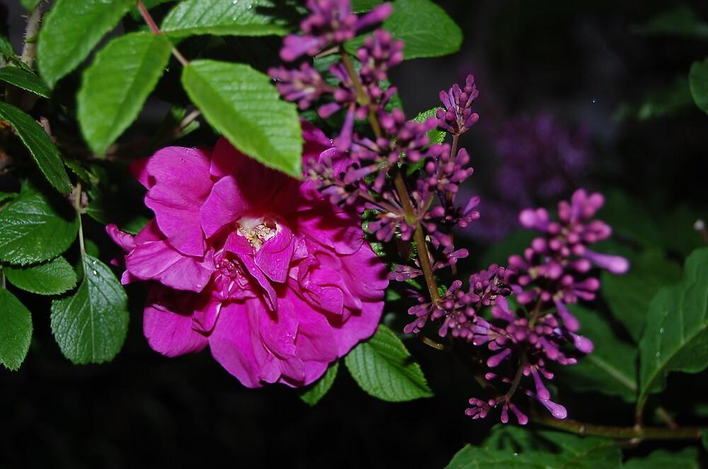 Fading Purple by atmbroke