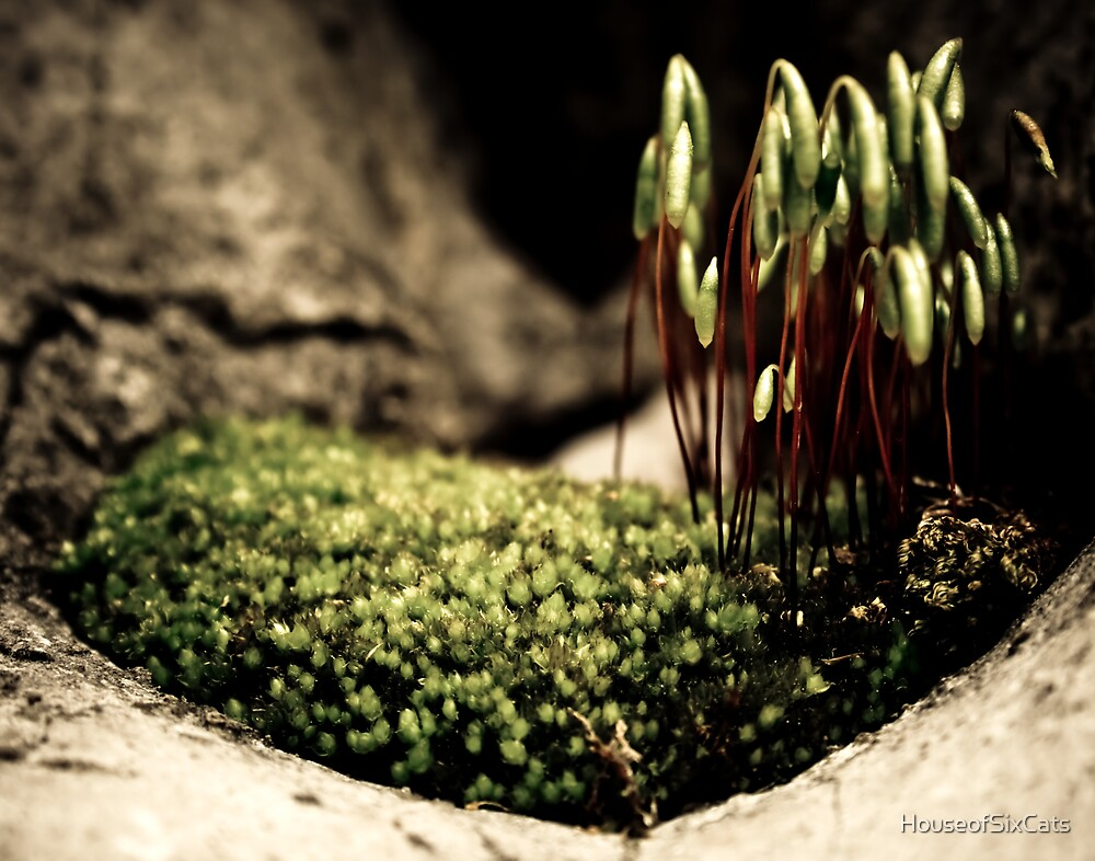 Moss Forest by HouseofSixCats