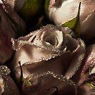Good morning rose by Sashy