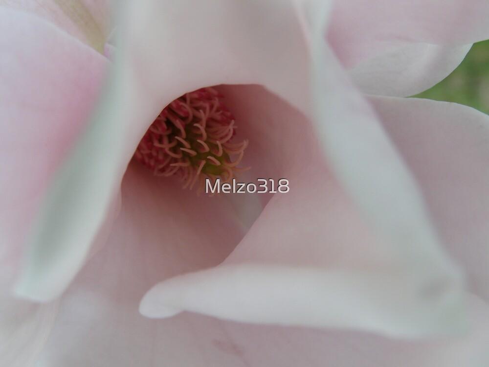 Magnolia by Melzo318