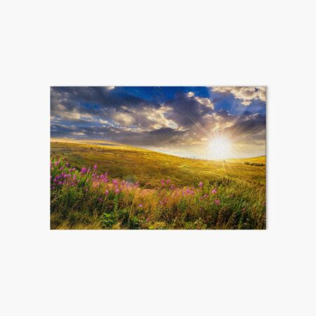 wild flowers on the mountain top at sunset Art Board Print