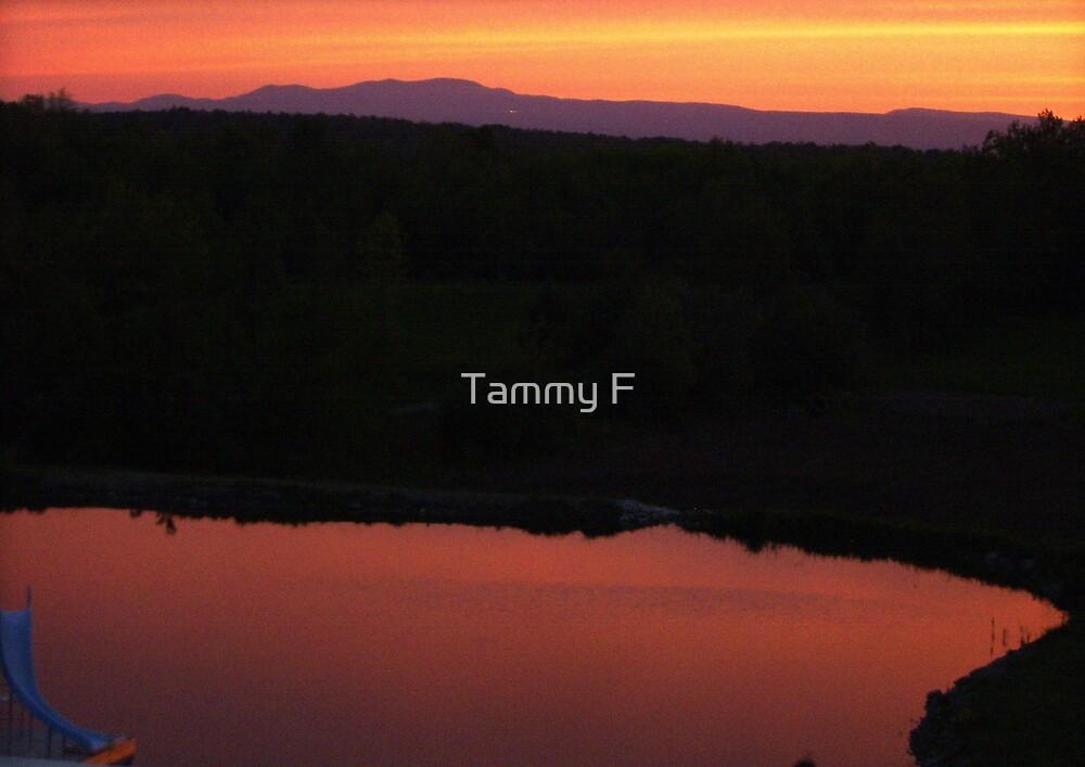Pink Pond by Tammy F
