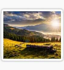 coniferous forest in foggy Romanian mountains at sunset Sticker