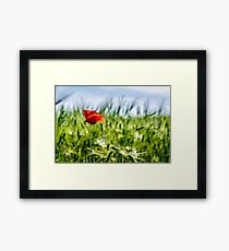 red poppy in the wheat field Framed Print
