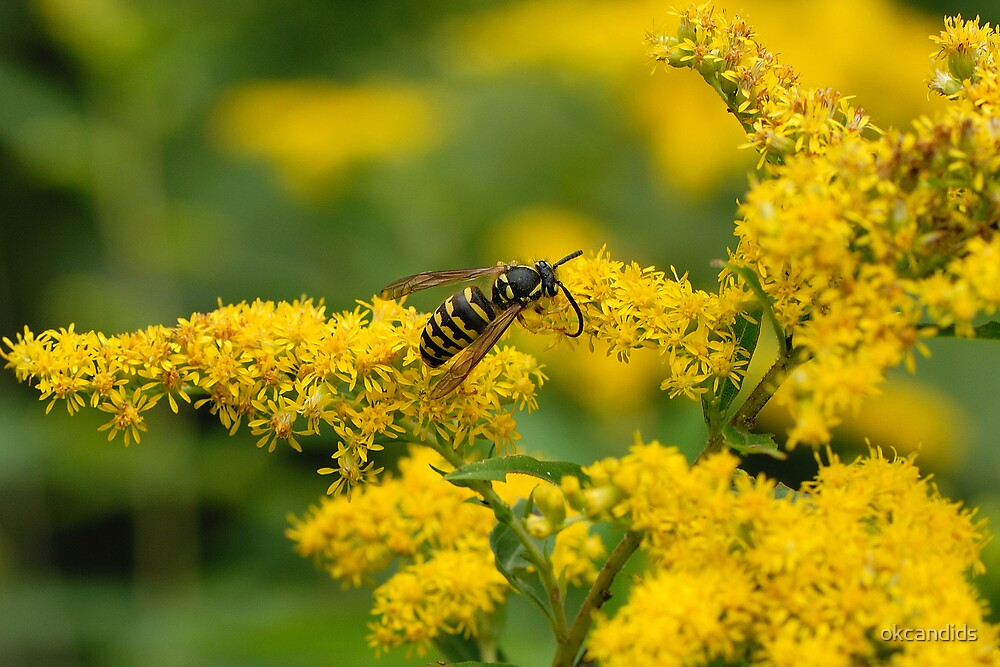 Flower and Yellow-Jacket Hornet by okcandids