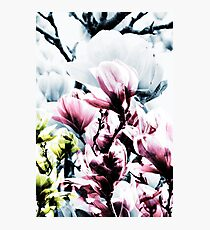 Magnolia 01 Photographic Print