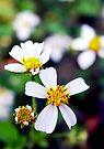 Wild Flowers by Dave Lloyd