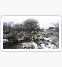 Snow Dusted Wetland Trees And Scrub Sticker