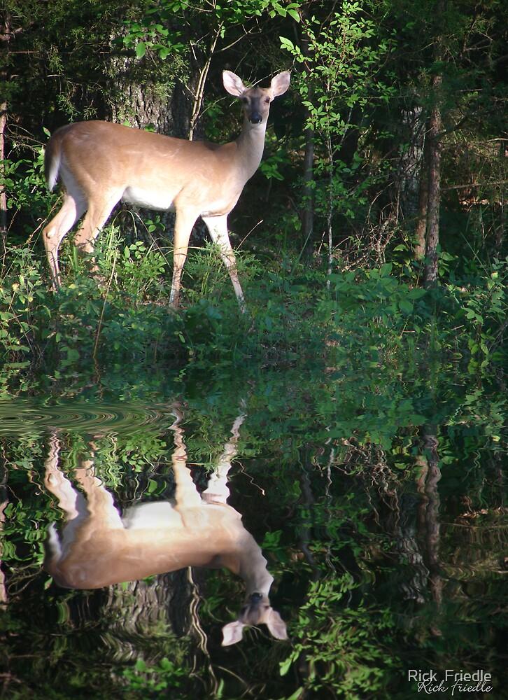 Deer at Dusk by Rick  Friedle