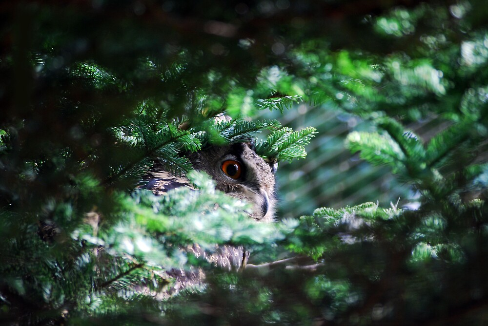 Eagle Owl by KerryCash