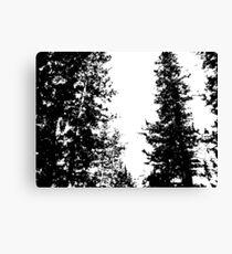 Black and White Colorado Pines Canvas Print