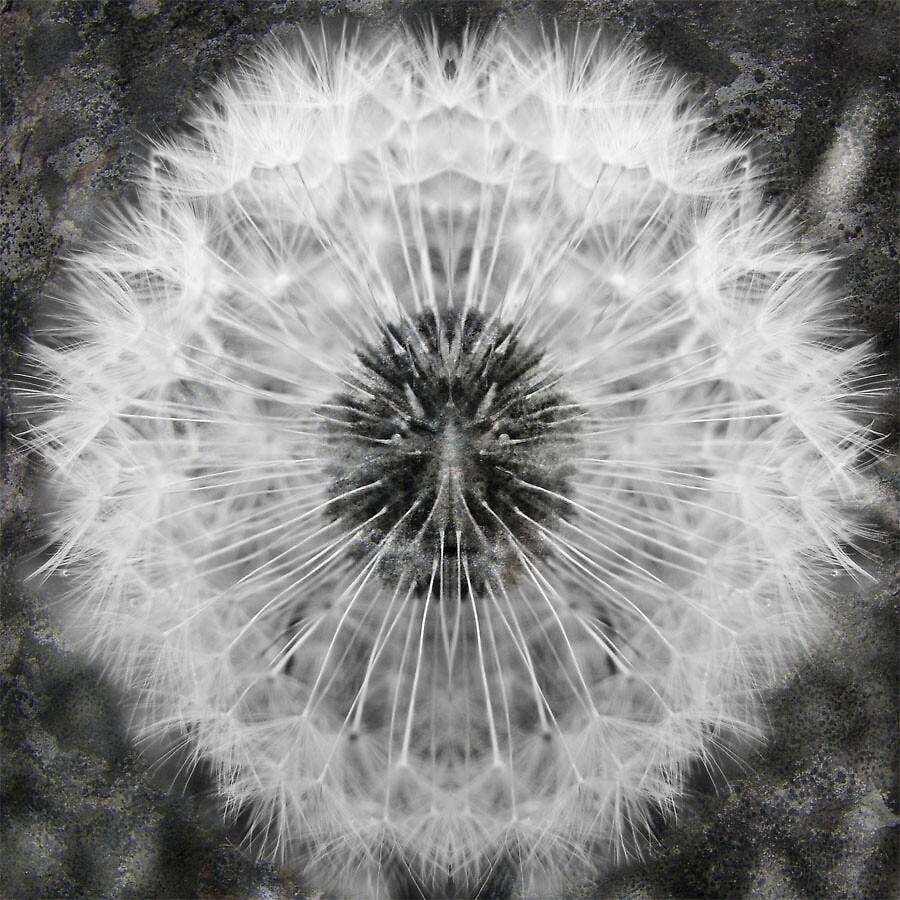 DandeLion by Judy Olson